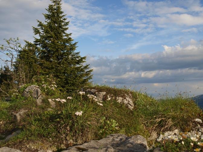 Allgäuer Alpen – Öffnungszeiten der Berghütten